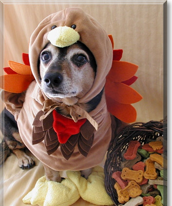 thanksgiving-dog-of-the-day-2