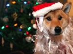 holiday-pet-hazards-2