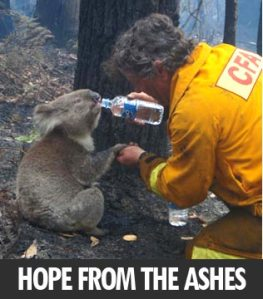 hope-from-the-ashes1