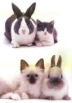 e-cat