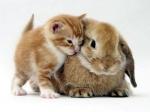e-kitten