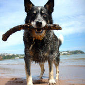 news_castawaydogsurvives-4-months-on-desseted-island