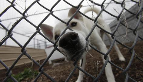 rescue-pup
