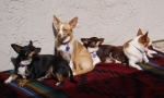 the-gang-out-sunning-on-easter