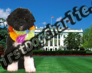 white-house-dog-2
