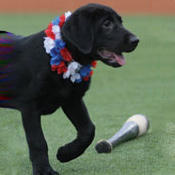 yogi-the-baseball-dog