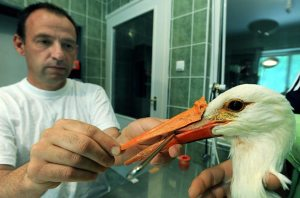 artificial beak for stork