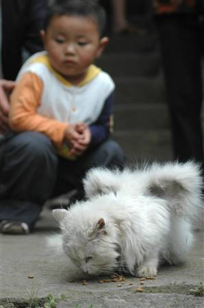 winged_cat_China