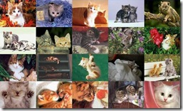 Cat Collage