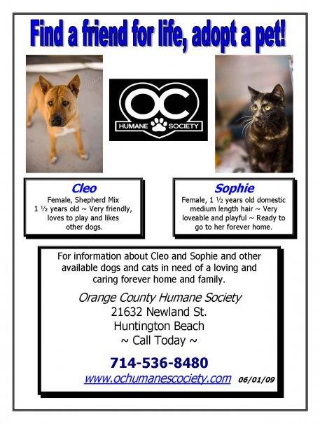 OC Humane Society's Flyer 2  - HB