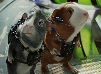 G Force Movie Likely To Put Guinea Pigs Atop Pet List Justonemorepet