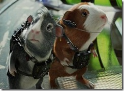 G- Force Guinea Pigs