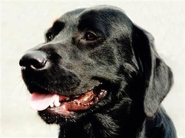 dog breeds with black gums