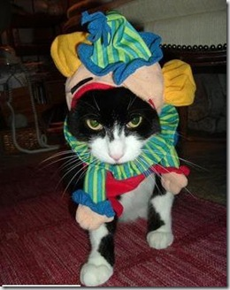 Clown Kitty 2