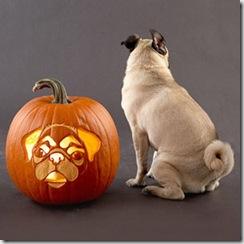 Pug Posterior Pose