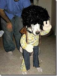 A Babyboomer's Dog!