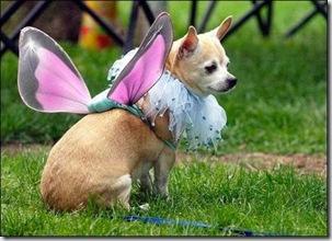 ChiChi Fairy