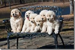 pups and pups