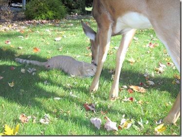 Bambi and Morris 1
