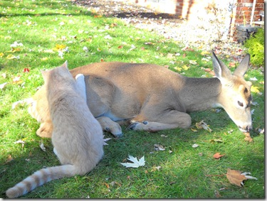 Bambi and Morris 2