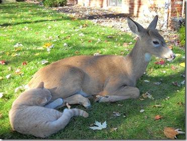 Bambi and Morris 3