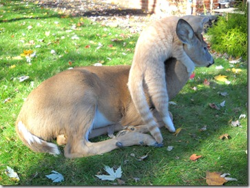 Bambi and Morris 4