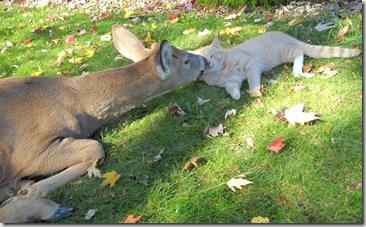 Bambi and Morris 5