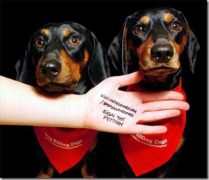 Stop Killing Dogs - Stop Dog Farms