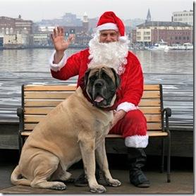 Balzac (225 lbs) with Santa
