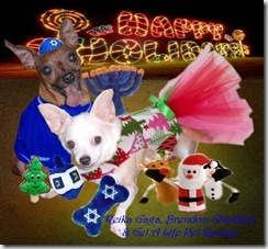 Chanukah Card from Foster Pups