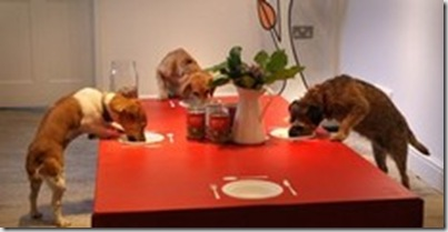 Chowing Down at Lilly's Dog Restaurant