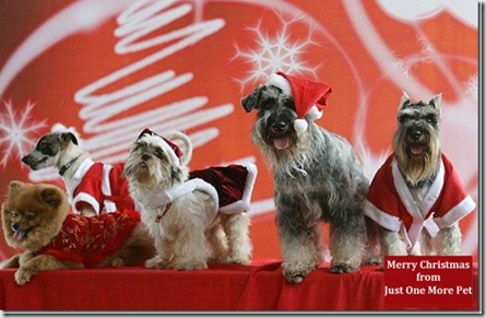 Just One More Pet Christmas Card 2010
