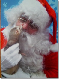Rocky the Ferret Kisses Santa