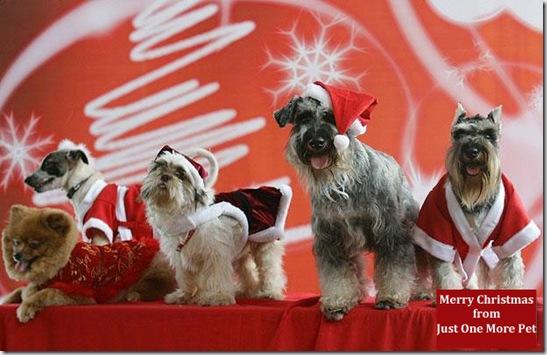 santa-dogs