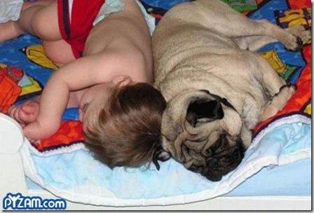 Baby and Pug