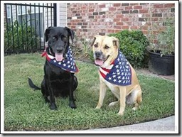 Patriotic-Pets--4th-of-July-Dogs