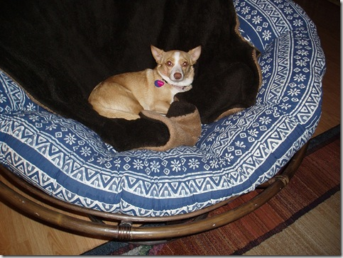 Princess in the Big Chair - 2