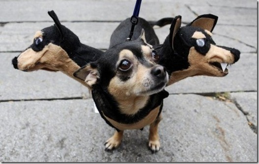 Dachshund Costume & Creative Pet Halloween Costumes « JustOneMorePet