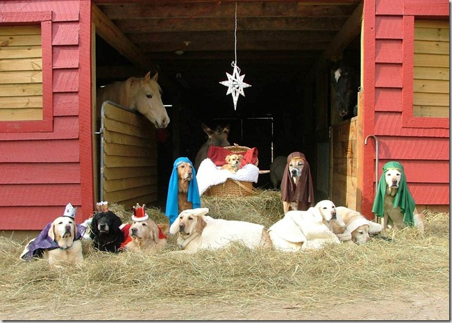 Animal Nativity 3