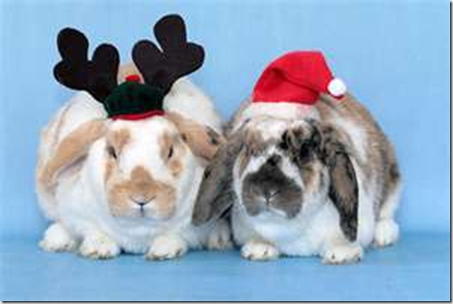Bunnies in Hats th