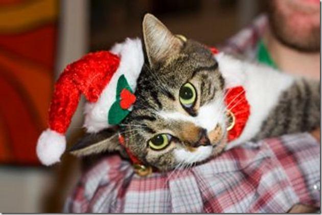 Christmas_cat(1)