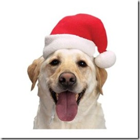 dog-christmas-santa-hat