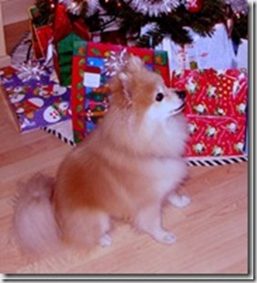 precious at Christmas
