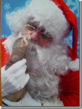 rocky-the-ferret-kisses-santa_thumb