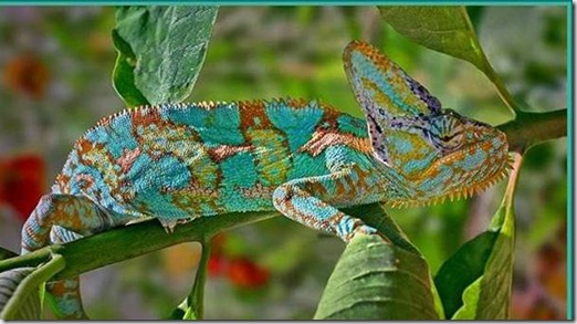 Colorful_Lizard
