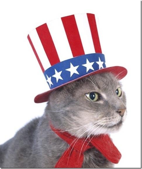 Cool Patriotic Cat