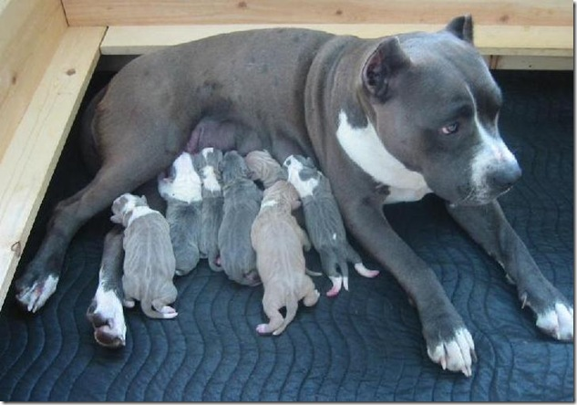 Doggie Moms 3