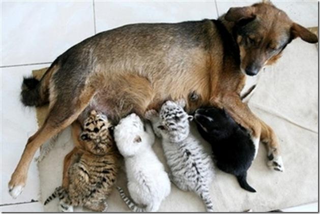 Doggie Moms 7