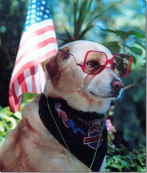 Patriotic Cool Dude