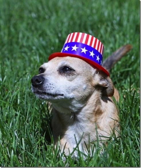 Patriotic Dog 3